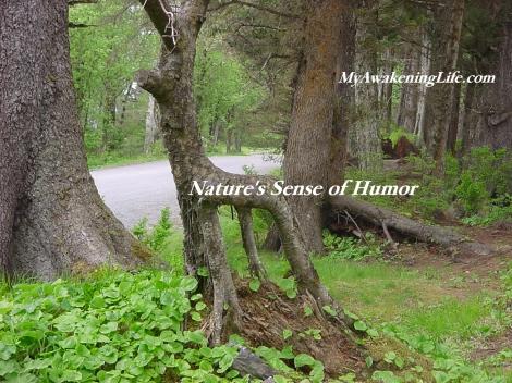 nature_humor
