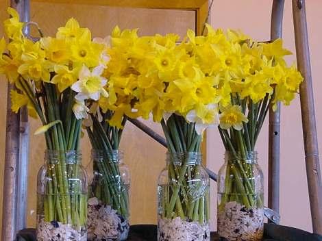 daffodils_kathy
