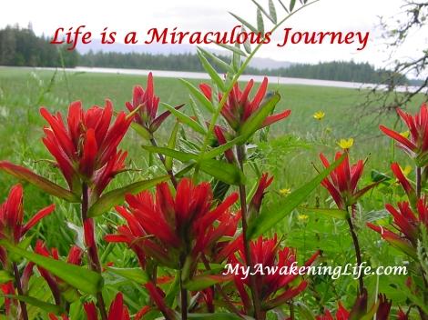 miraculous_journey