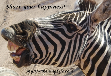 zebra_happiness