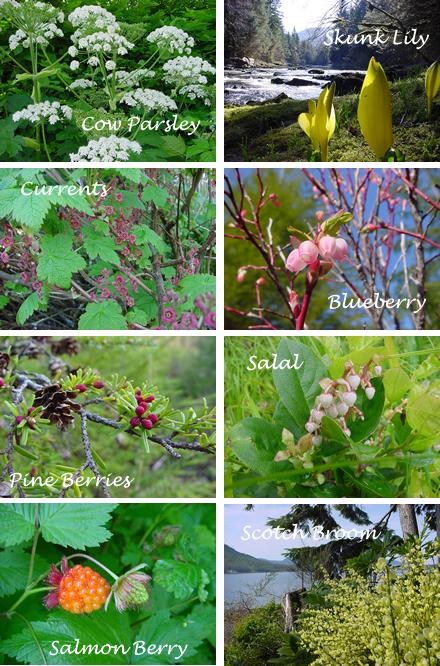 harbinger_of_spring_southeast_alaska