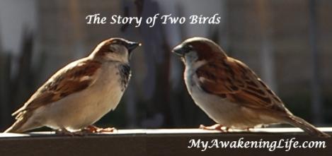two_birds