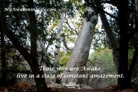 awake_buddha