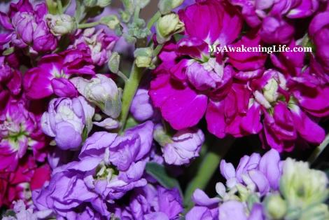 flower_stock